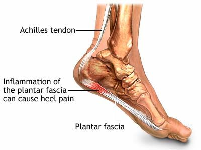 Foot & Injury Anatomy